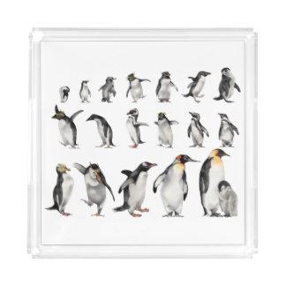 Penguins of the World Acrylic Tray