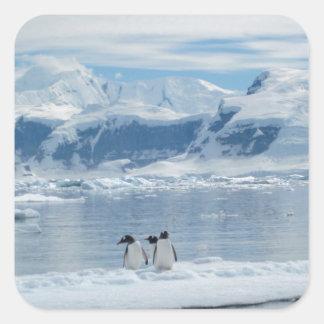 Penguins on an iceberg square sticker