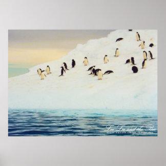 Penguins On Ice, print
