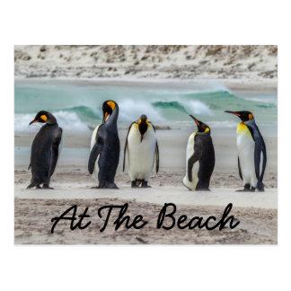 Penguins preening on beach postcard