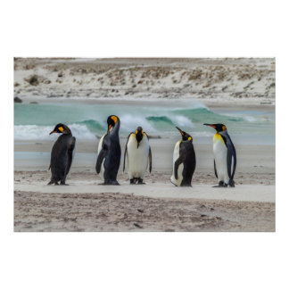 Penguins preening on beach poster