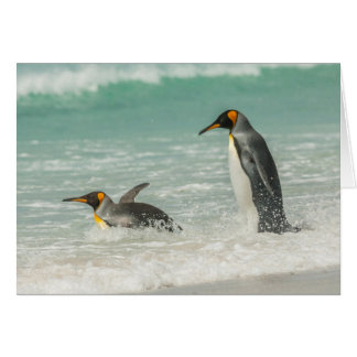 Penguins swimming on the beach card