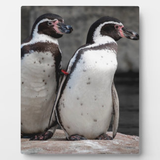 Penguins Watching Plaque