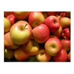 Pennsylvania Apples Postcard
