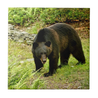 Pennsylvania Black Bear Tile