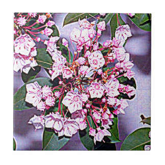 Pennsylvania Mountain Laurel Tile