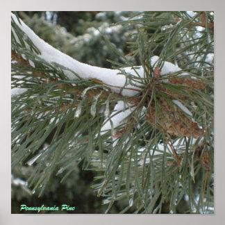 Pennsylvania Pine Poster