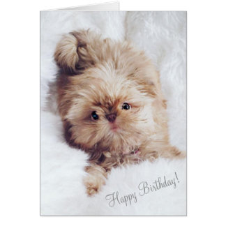 Penny orange liver Shih Tzu greeting birthday card