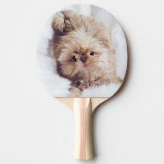 Penny orange liver Shih Tzu pup ping pong paddle
