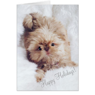 Penny orange liver Shih Tzu puppy Christmas card