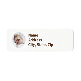 Penny orange liver Shih Tzu puppy return labels