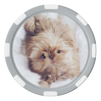 Penny the orange liver Shih Tzu puppy poker chip