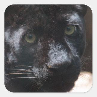 Pensive Black Panther Square Sticker