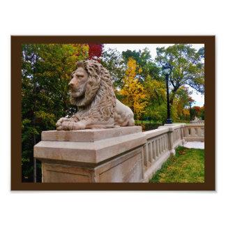 Pensive Lion Photo Print