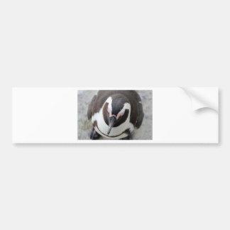 Pensive penguin bumper sticker