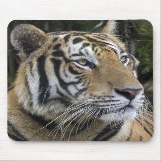 Pensive Tiger Up Close Mousepad