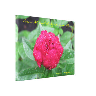 Peonie After Rain Wrapped Canvas