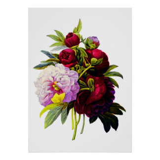 Peonies by Pierre Joseph Redoute Poster