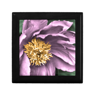 Peony Rain in Color Gift Box