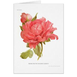 Peony  'Reine Elizabeth' Card