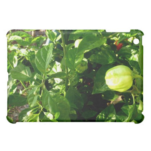 pepper plant with one green pepper iPad mini covers