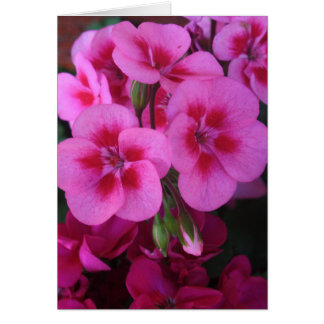 Peppermint Pink Geranium 2 Card