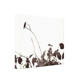 Perched Hummingbird 14x11 Wrapped Canvas