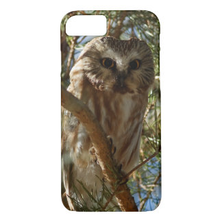 Perched Northern Saw-Whet Owl iPhone 8/7 Case