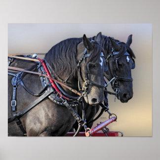 Percheron Draft Horse Work Team Poster