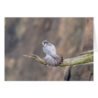 Peregrine Falcon at the Palisades Interstate Park Card