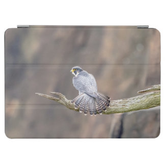 Peregrine Falcon at the Palisades Interstate Park iPad Pro Cover