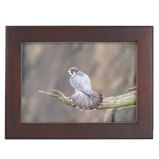 Peregrine Falcon at the Palisades Interstate Park Keepsake Box