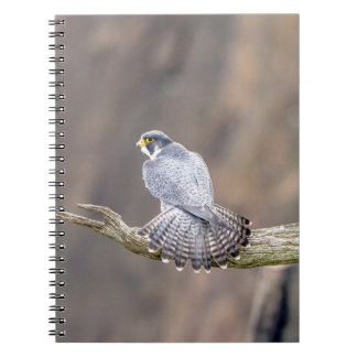 Peregrine Falcon at the Palisades Interstate Park Notebook