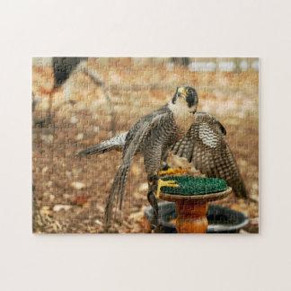 peregrine falcon, bird of prey puzzle