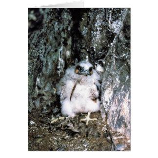 Peregrine Falcon Chick Card