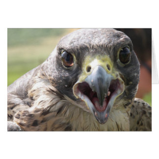 PEREGRINE FALCON PAPER PRODUCTS CARD