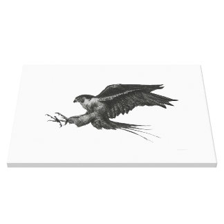 Peregrine Hawk canvas print