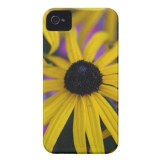 Perennial coneflower (Rudbeckia fulgida) Case-Mate iPhone 4 Cases