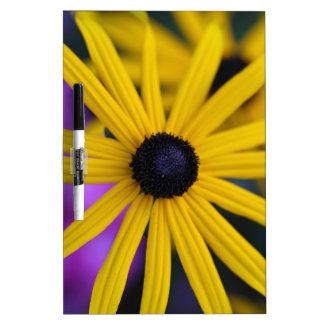 Perennial coneflower (Rudbeckia fulgida) Dry Erase Board
