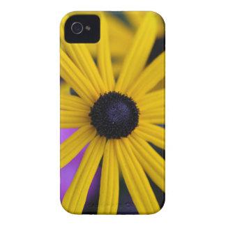 Perennial coneflower (Rudbeckia fulgida) iPhone 4 Cover