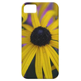 Perennial coneflower (Rudbeckia fulgida) iPhone 5 Cases