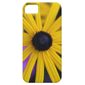 Perennial coneflower (Rudbeckia fulgida) iPhone 5 Cover