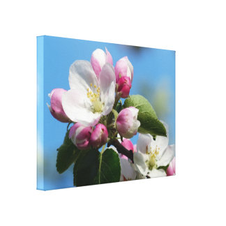 Perfect Apple Blossom WrappedCanvas (Gloss) Canvas Print