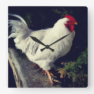 Perfect Chicken Square Wall Clock
