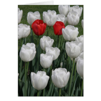 Perfect Pair (red and white tulips) Card
