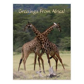 Perfect Partners - Postcard