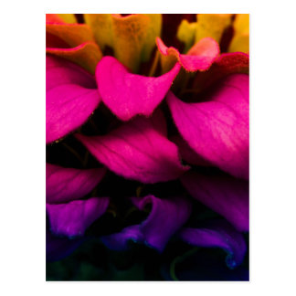 Perfect Petals Postcard