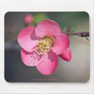 Perfect Pink Flowering Quince Mouse Pad