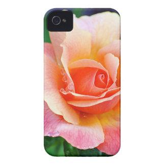 Perfect Rose in Bloom iPhone 4 Case-Mate Case