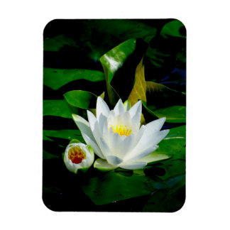 Perfect White Water Lily and Bud Rectangular Photo Magnet